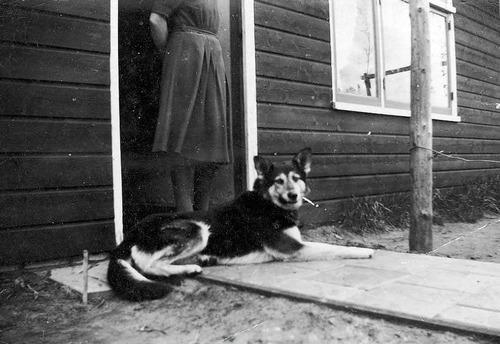 Hond in kamp Westerbork.