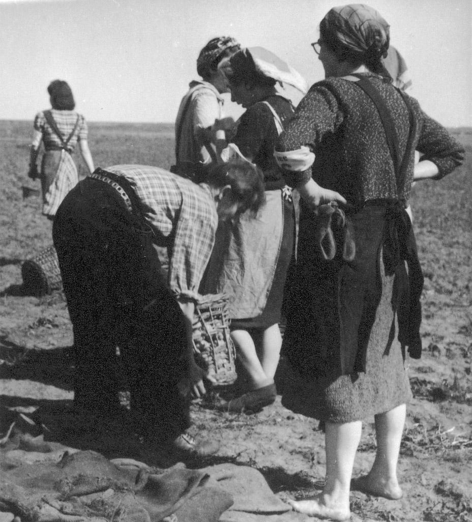 Werken op het land. Kamp Westerbork, 1943.