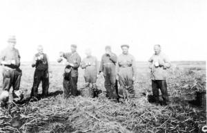 Gevangenen van Westerbork werkend op het land.